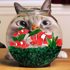Great savings on this Robofish with Pawsifty - your source of daily pet deals with free worldwide delivery.    http://www.pawsify.com/product/robofish/