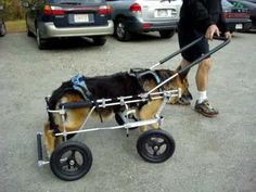 A quad wheelchair cart might be best for a dog in some cases so they aren't always putting weight on their front legs.