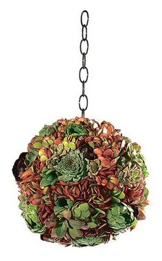 Succulent Kissing Ball from Rolling Greens Nursery. Hanging Succulents, Succulents In Containers, Cacti And Succulents, Cactus Plants, Succulent Ideas, Indoor Garden, Lawn And Garden, Flower Beds, Air Plants