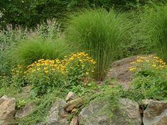 Maiden Grass on top of a wall.