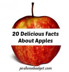 20 Delicious Facts About Apples http://poshonabudget.com/2014/09/20-delicious-facts-about-apples.html#axzz3ELi7wIr5