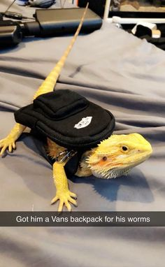 So we got Tomato a little backpack for his worms. Cute Animal Memes, Animal Jokes, Cute Funny Animals, Cute Animal Pictures, Funny Pets, Funny Lizards, Pet Lizards, Cute Reptiles, Leopard Gecko Cute