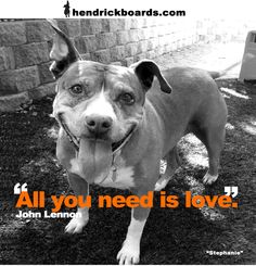 """""""All you need is LOVE""""  -John Lennon    All animals deserve a second chance at finding love. Please fight for the over 5 million animals dying every year in our shelters. All they ever needed was love.     Meet Stephanie and 6 year old pit rescue by SPOT Saving Pets One at a Time. Steph has a thyroid condition (simple to treat with daily thyroid pills), but the shelter never diagnosed and treated her. Please help get get the chance at love she deserve."""