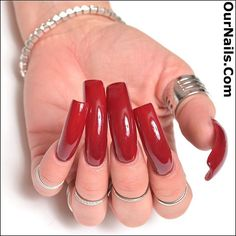 """My current nails, done yesterday, polished in China Glaze """"Merry Berry!"""" Such a beautiful color for the holidays! . My nails are all nearing an inch in length! Right now I am continuing to let them grow. How long should I grow them? What is your preferred length? . Please visit www.OurNails.com to see more pictures of me and my nails! . #nails #longnails #nailswag #naillife #notd #nailsoftheday #prettynails #frenchmanicure #feet #nailfetish #claws #longtoenails #sexynails #nailselfie…"""