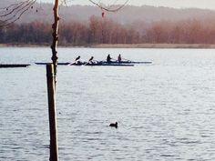 Canottieri sul lago di Varese Lombardia Italy By Tosatti