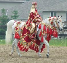 Arabians horses in dress gear.