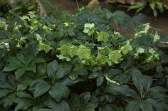 young green plants subtropics