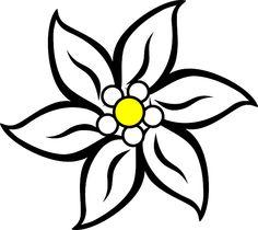 Stella Alpina, Fiore, Natura, Impianto, White, Europa