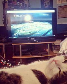 We're up barely  . . . #kasperithecat #cats #catsofinstagram #instacat #f1 #cmoref1