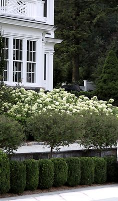 bank of hydrangeas spill down to lower level.... Janice Parker Landscape Design