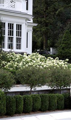 bank of hydrangeas spill down to lower level.... Janice Parker Landscape Design