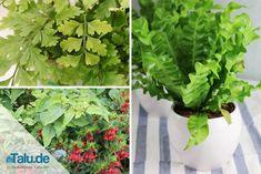 Sie möchten Ihr Zuhause mit Zimmerpflanzen aufhübschen, sorgen sich aber um die Lichtverhältnisse? Diese Pflanzen benötigen nur wenig Licht.