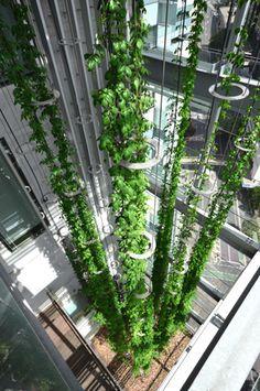 Sculptures of living green | Ronstan_1-2014111814162876681902 | ODS