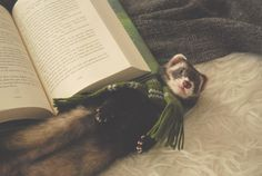 The book ferret