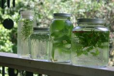 Use about 1/4 c. of fresh herb per cup. So, for a half gallon of tea (which is 8 cups), use 2 cups of fresh herbs to 8 cups water, or 4 cups fresh herbs to 16 cups water for a full gallon. Place the herbs in first, top off with water (and sweetener, if using), cover with a secure lid, give the contents a good shake, and leave in full sun for 5-8 hours, depending on how intense of a flavor you wish to achieve.    Herbs : Anise, hyssop, apple, mint, basil, calendula, chamomile, chives, ...