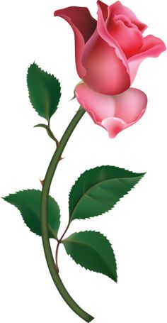 Large Pink Rose Bud Painting PNG Clipart