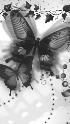 black and white butterflies artwork Dragonfly Drawing, Butterfly Artwork, Butterfly Fairy, Paper Butterflies, Beautiful Butterflies, Butterfly Kisses, Butterfly Background, Butterfly Black And White, Black And White Love