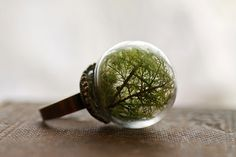 Hey, I found this really awesome Etsy listing at https://www.etsy.com/listing/186327992/moss-terrarium-ring-real-moss-dark-green