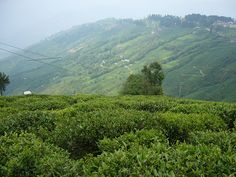 Darjeeling is a town in the Indian state of West Bengal. Darjeeling Tea, India Culture, West Bengal, Asia Travel, Beautiful Pictures, Tours, River, City, World