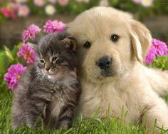 Cani e gatti..