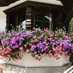 Mein Blumenmeer im Sommer am wunderschönen Erker. Patio, Plants, Summer, Lawn And Garden, House, Nice Asses, Plant, Planets, Terrace