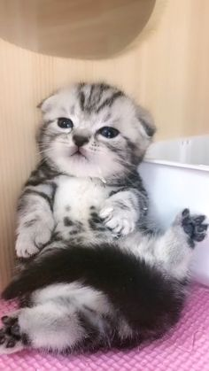 Cute Baby Puppies, Cute Baby Cats, Cute Cats And Kittens, Cute Little Animals, Kittens Cutest, Funny Cute Cats, Cute Funny Animals, Beautiful Cats, Animals Beautiful