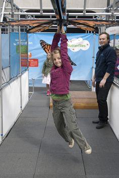 Monarch migration monorail | Amazing Butterflies 2013