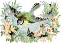 Oblaten Glanzbild scrap die cut chromo Vogel bird  16,5 cm Blüten blossom