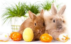 bunny, Easter, cute animals, rabbits, Easter eggs