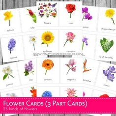 Montessori Flower 3 Part Cards by Pinay Homeschooler Shop Cutting Activities, Toddler Activities, Learning Activities, Kids Learning, Insect Activities, Kindergarten Learning, Teaching, Montessori Color, Montessori Math