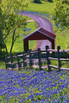 Brenham, Texas--Covered bridge and Blue Bonnets! Piece of Heaven! on the way to Round Top Texas from The Woodlands! Bluebell Ice Cream and Bluebonnets! Texas Hill Country, Country Life, Country Roads, Country Living, Country Fences, Country Style, Marie W, Beautiful World, Beautiful Places
