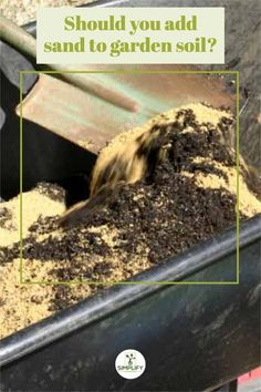 Could sand be the answer? Should you add sand to your garden soil? There are lots of reasons why you should and many why you shouldn't. but in this article I cover the question should you add sand to your garden soil and give you all the pros and cons. #cottagegardenflowers #roses #flowers #climbingroses #rosegarden Raised Bed, Raised Garden Beds, Vegetable Garden Soil, Organic Mulch, Sandy Soil, Peat Moss, Top Soil, Clay Soil, Climbing Roses