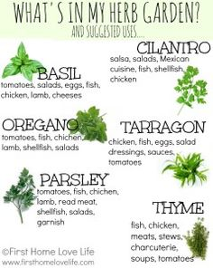 What to plant in our kitchen window herb garden