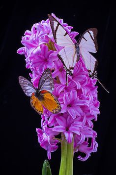 Two Butterflies By Garry Gay