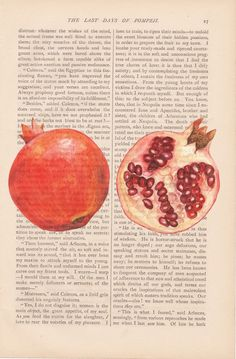 pomegranate illustration on book pages. like!!!