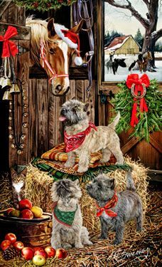 cairn terrier christmas - Google Search