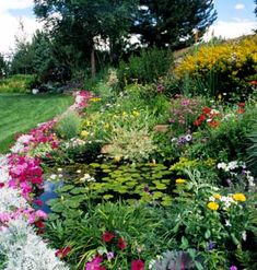 How to Grow Water Lilies and keep a pond clean.