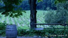 Shades of green looking out on the vineyard. © Gonzalo Santos 2013