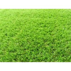 Concord Global Trading Artificial Grass Synthetic Lawn Turf Roll Runner 26 in. x 36 ft. Whole - The Home Depot Artificial Grass Carpet, Artificial Turf, Outdoor Carpet, Indoor Outdoor, Outdoor Ideas, Lawn Turf, Synthetic Lawn, Lawn Equipment, Outdoor Material