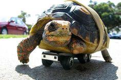 Net als deze schildpad