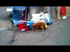 Stray Dog in South Korea Chow Mix **Very sad**