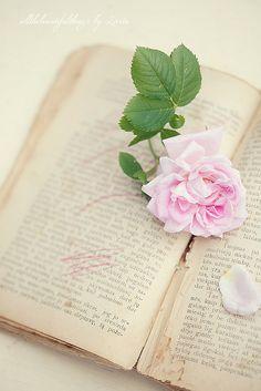 Rose Love by loretoidas, via Flickr