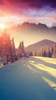 Sun Shining Through Winter Pine Trees iPhone 6 Wallpaper