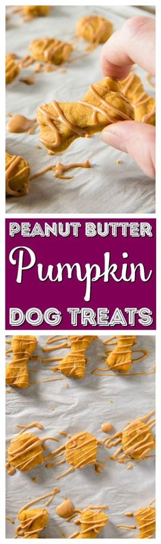 Why should humans get all the tasty fall desserts? Treat your pup to these homemade dog treats and let 'em revel in the season with you! via @KaufmannsPuppy