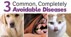 Many dog parents today are more concerned about exotic diseases than helping prevent the most common types of disorders we see in canine companions today. http://healthypets.mercola.com/sites/healthypets/archive/2017/08/23/most-common-preventable-canine-diseases.aspx