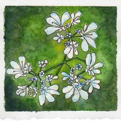 Day 10 of my July watercolour painting challenge: Coriander flowers, painted with Winsor & Newton paints on Fabriano Artistico 300gsm, with 0.3 Unipin fineliner ink pen. #WorldWatercolorMonth July 10 2017.