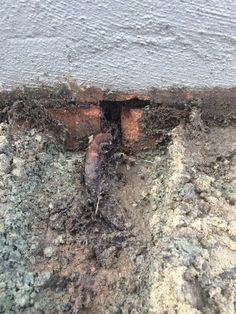 Weep holes in retaining wall are below the paver level causing the pavers to sink and root growing though.