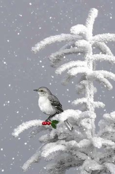 Bird with holly berries