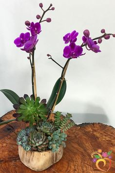 This beautiful combination of succulents and a miniature orchid plant is a great gift for anyone. They generally last quite some time, and the succulents can li