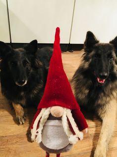 Bijou and Seager z Kovarny ❤️ #belgianshepherd  #belgiantervuren #zKovarny #lovemydog #lovemydogsomuch #xmass